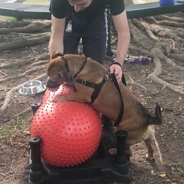 Great job Sam and Dot Com 👏👏👏 BarkFit - a Dynamic Workout