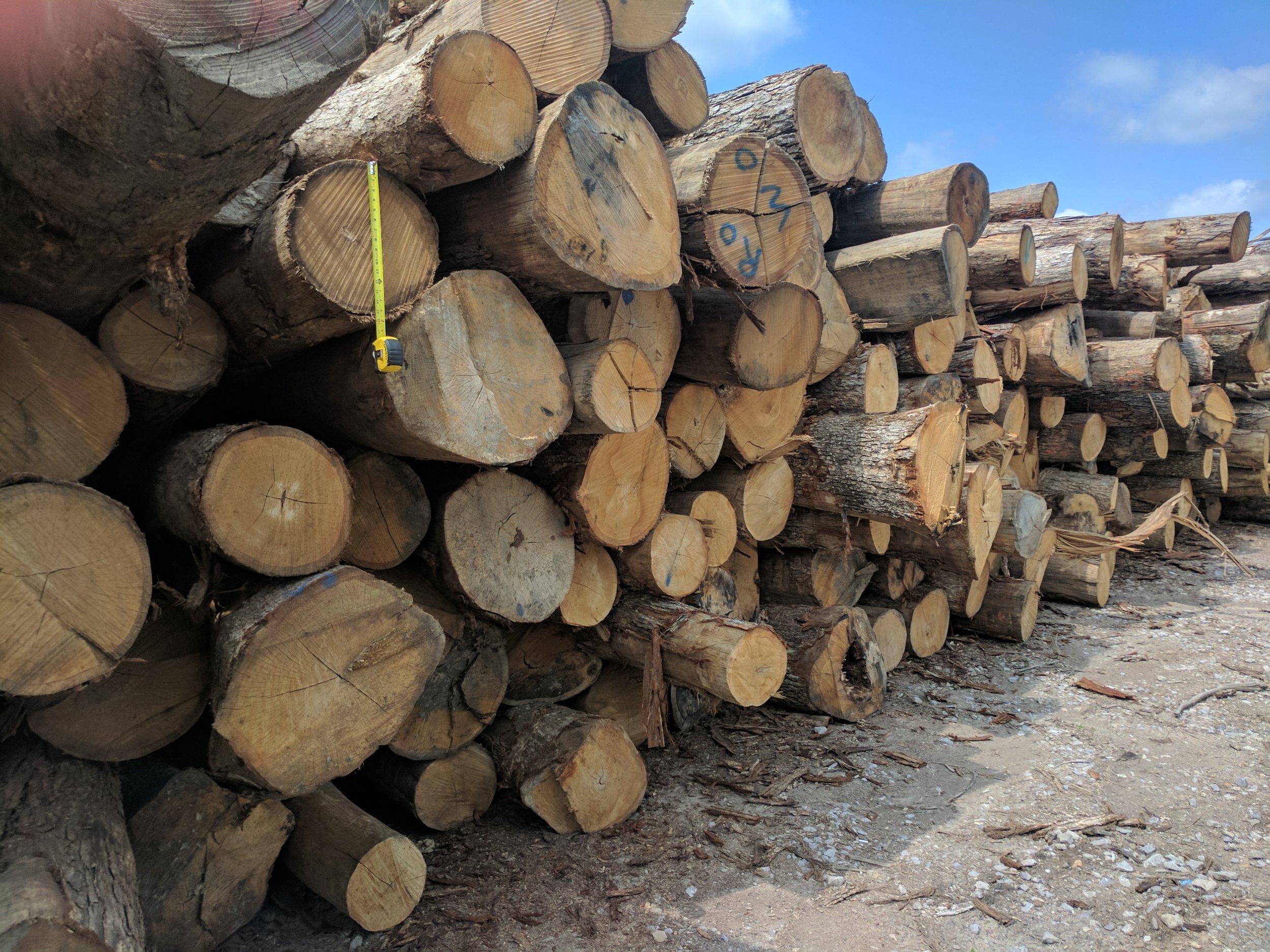 logs in yard.jpg