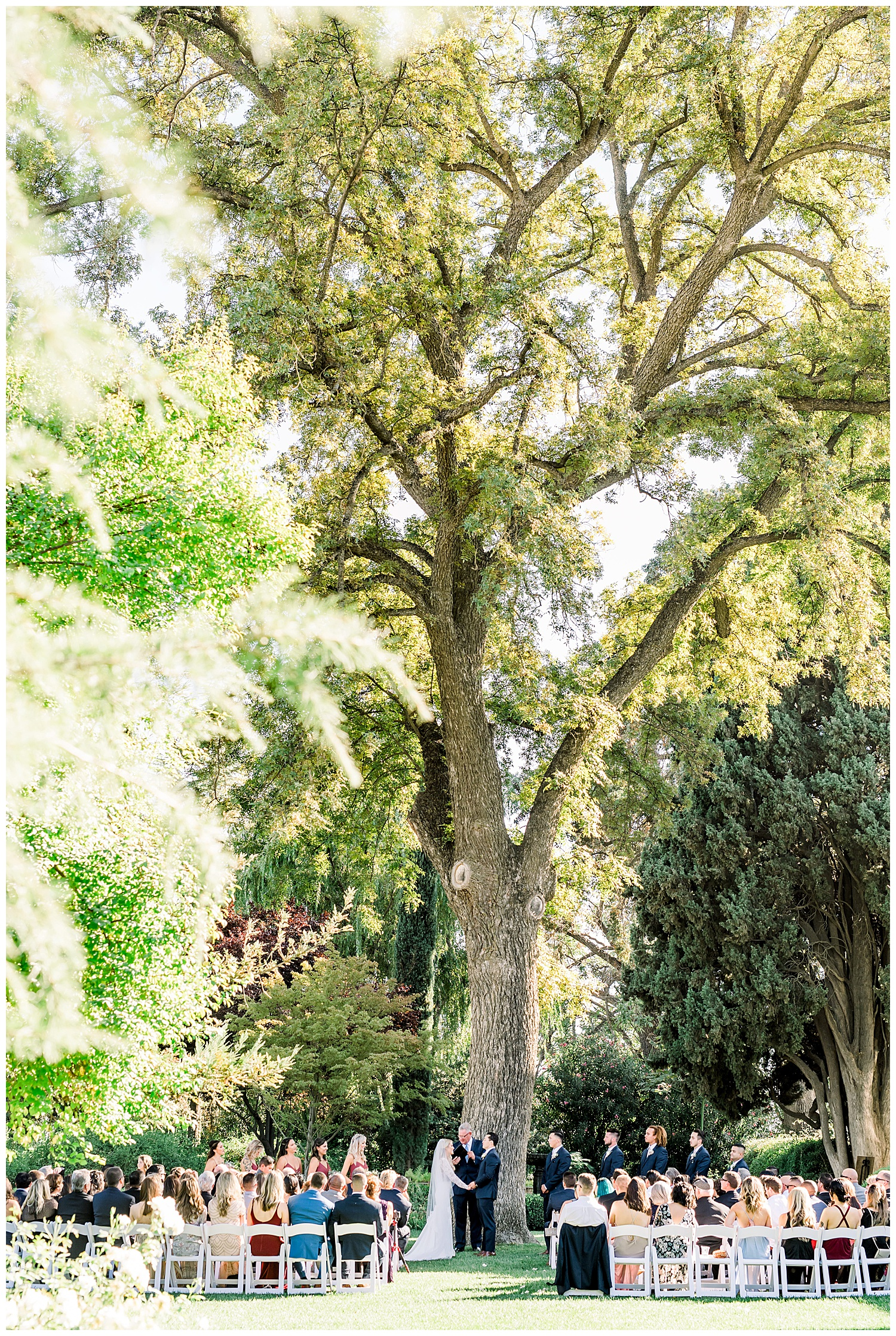 Janine_Licare_Photography_San_Francisco_Wedding_Photographer_Carneros_Tyge_Williams_Sonoma_Napa_0229.jpg