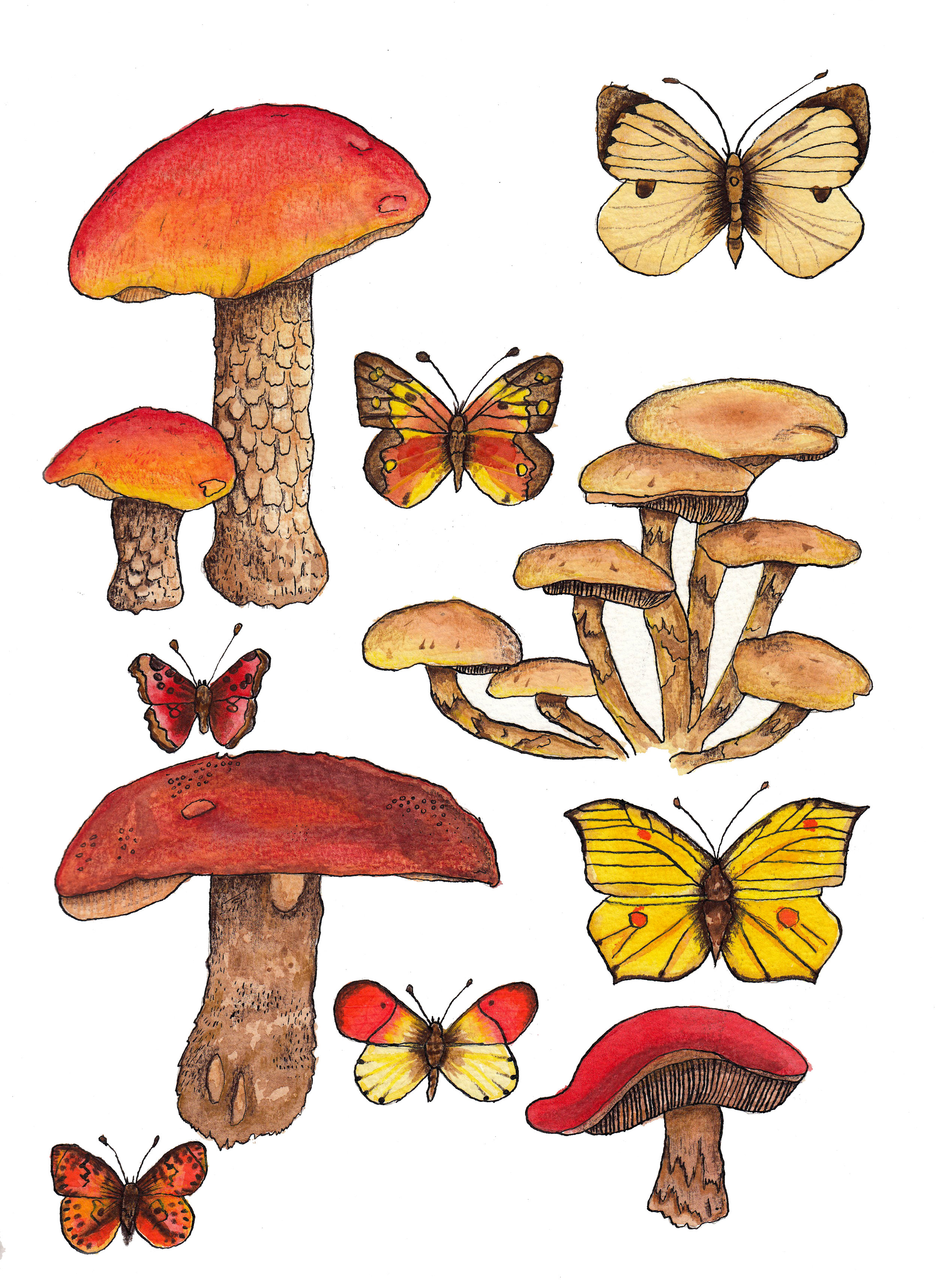 mushrooms and buterflys.jpg