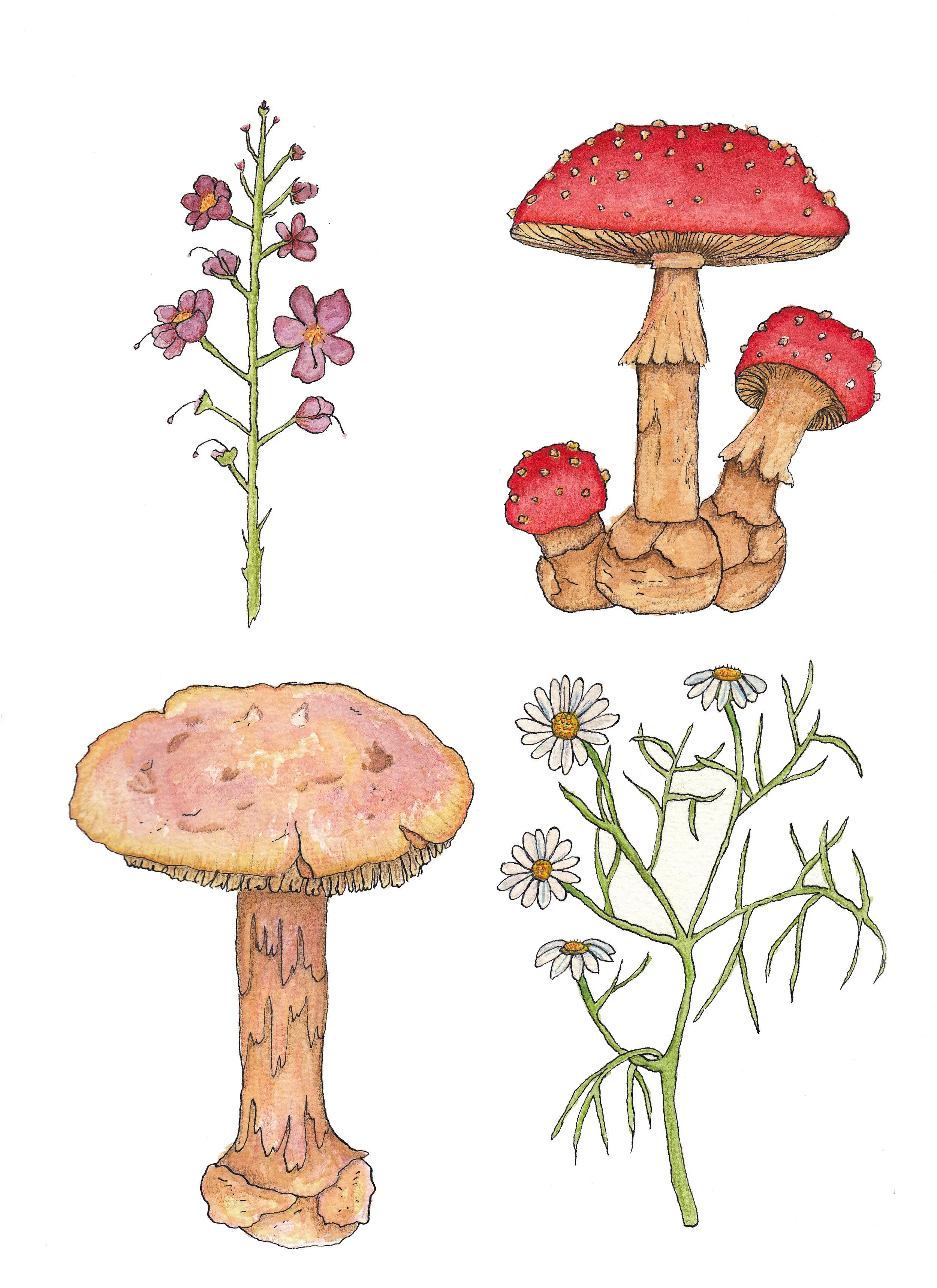 mushroom and flowers.jpg