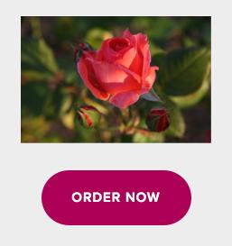 easy-ordering
