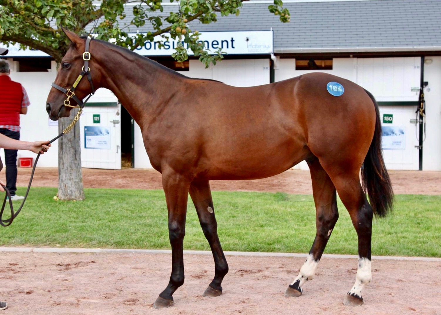 Lot 104 Frankel x Kenzadargent  Sold to Amanda Skiffington for €500,000 at the Arqana August Yearling Sale 2019