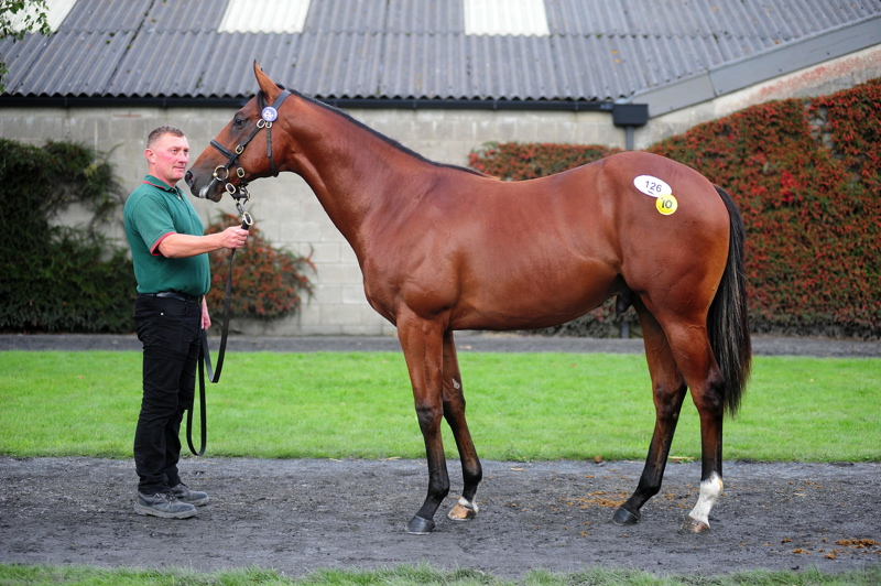 Lot 126 Holy Roman Emperor x Ape Attack  Sold to Hong Kong Jockey Club for €100,000 at the Tattersalls Ireland September Yearling Sale 2019