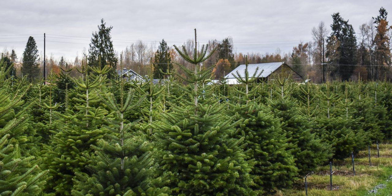 Tree-Farm-Large-1280x640.jpg