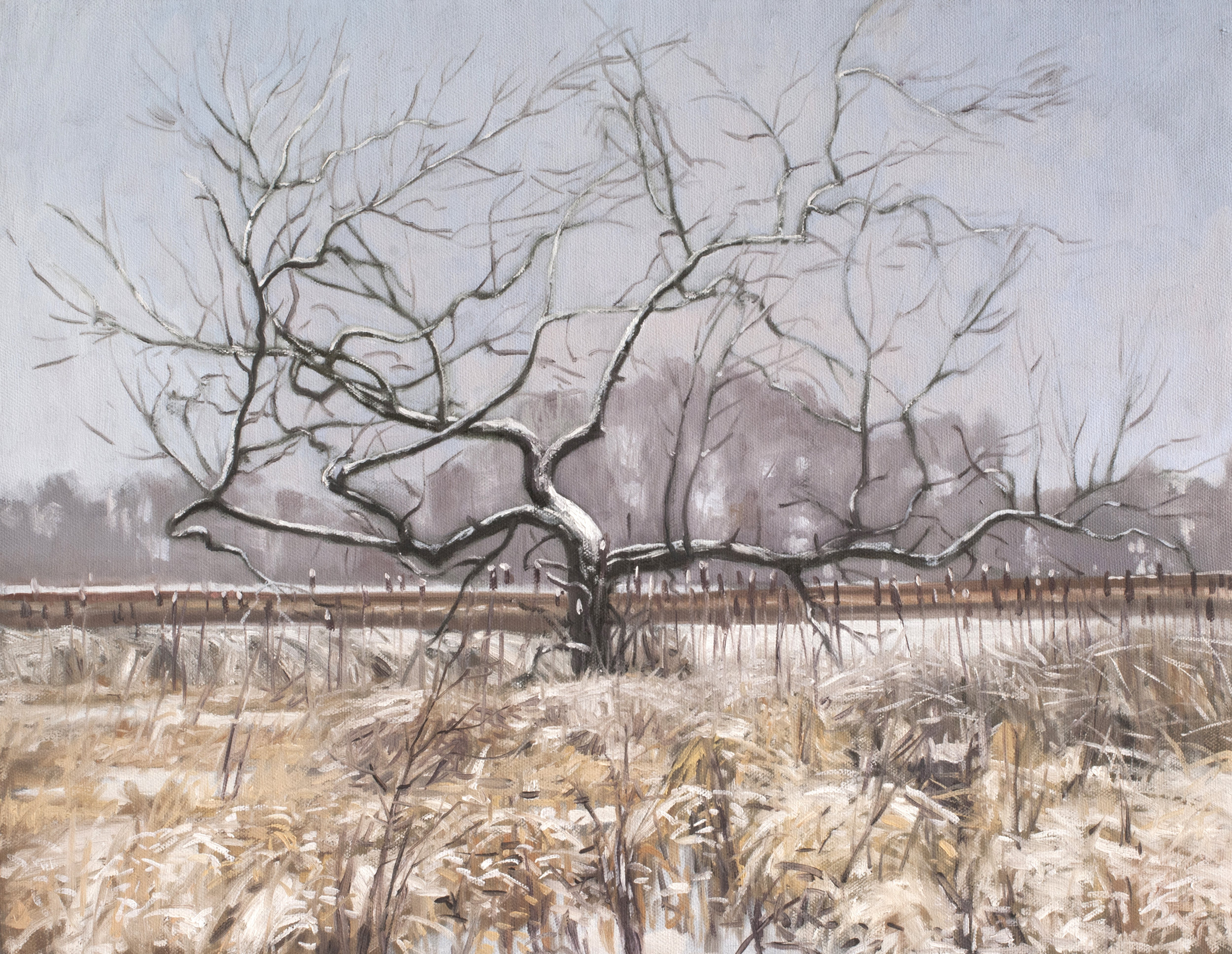 December 22 Lincoln Marsh