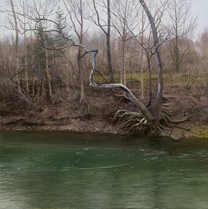 "Sycamore on Big Rock Creek  20x20""  2017"