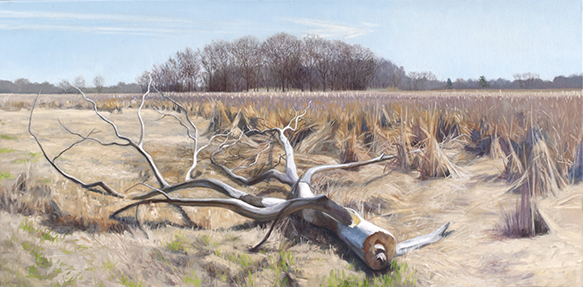 "April 23 Lincoln Marsh 18x36"" 2014"
