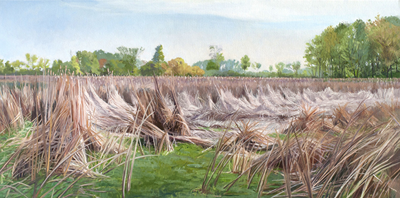 "May 23 Lincoln Marsh 18x36"" 2014 (sold)"
