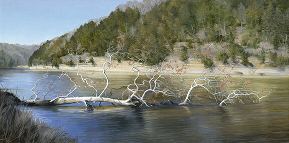 """Fallen Sycamore,"" 18x36"" 2018  SOLD"