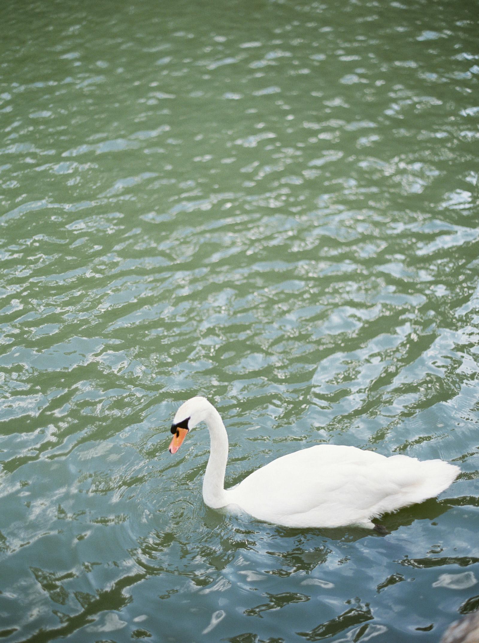 Napa-Wedding-Photography-Swan.jpg