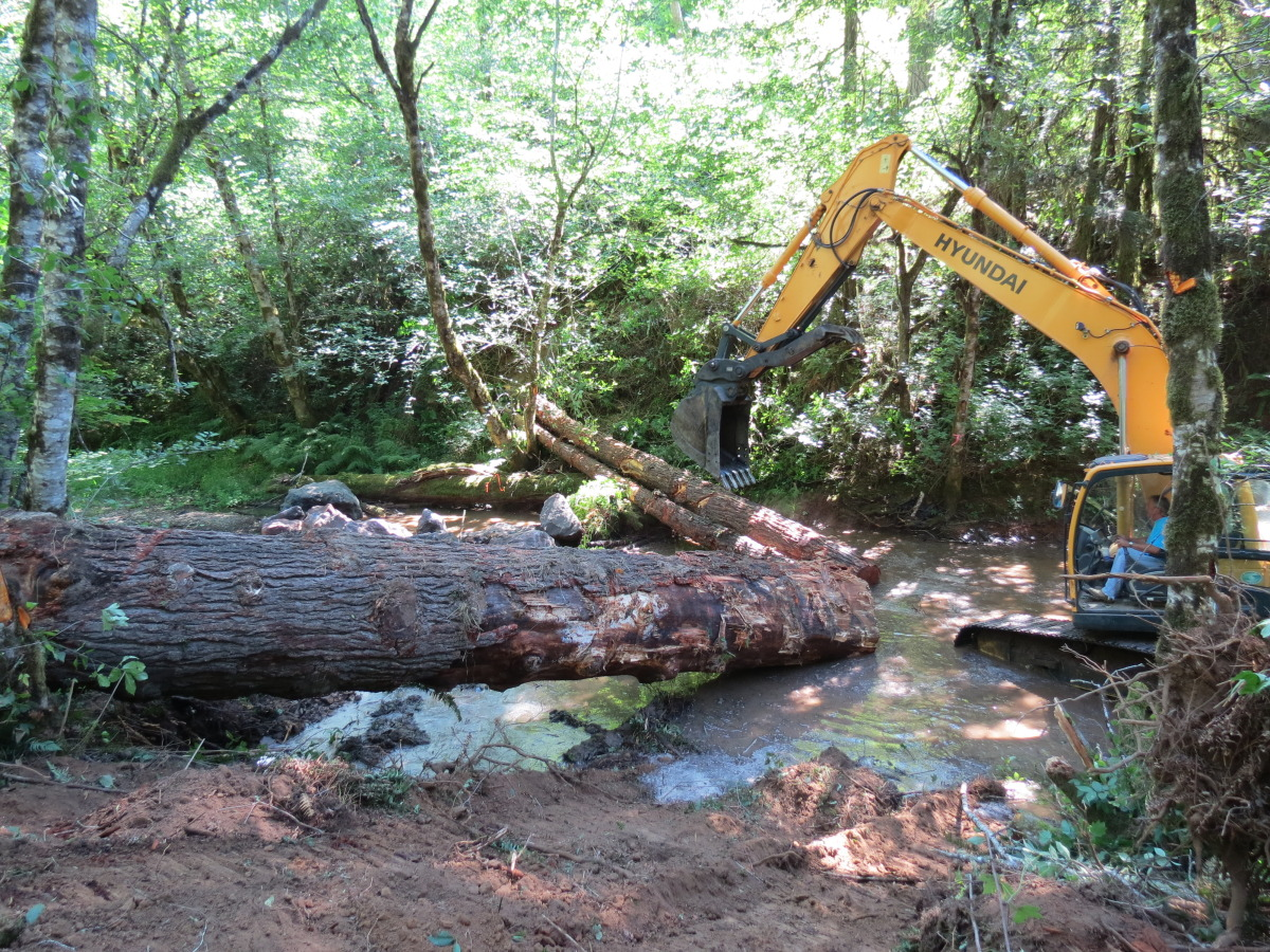 Brush Creek Restoration