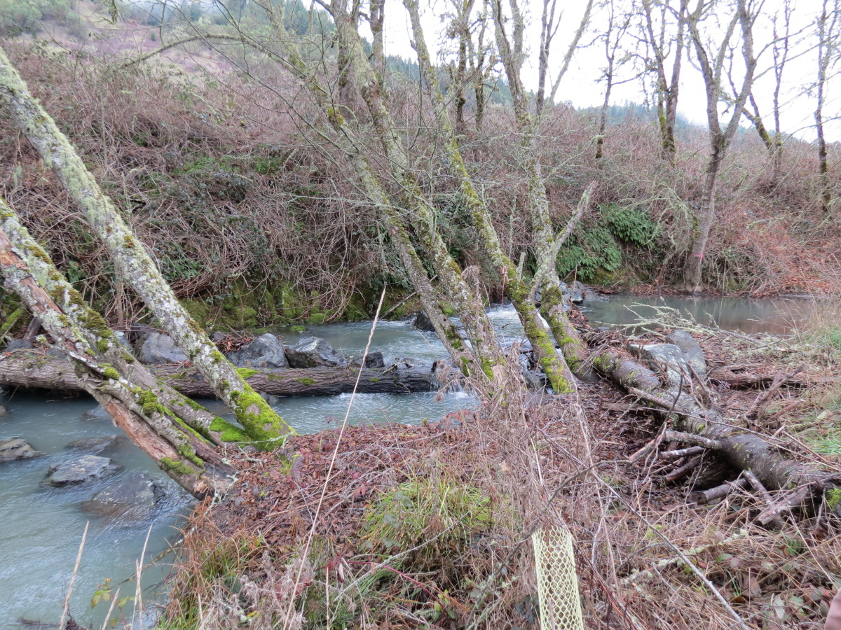 Days Creek Restoration