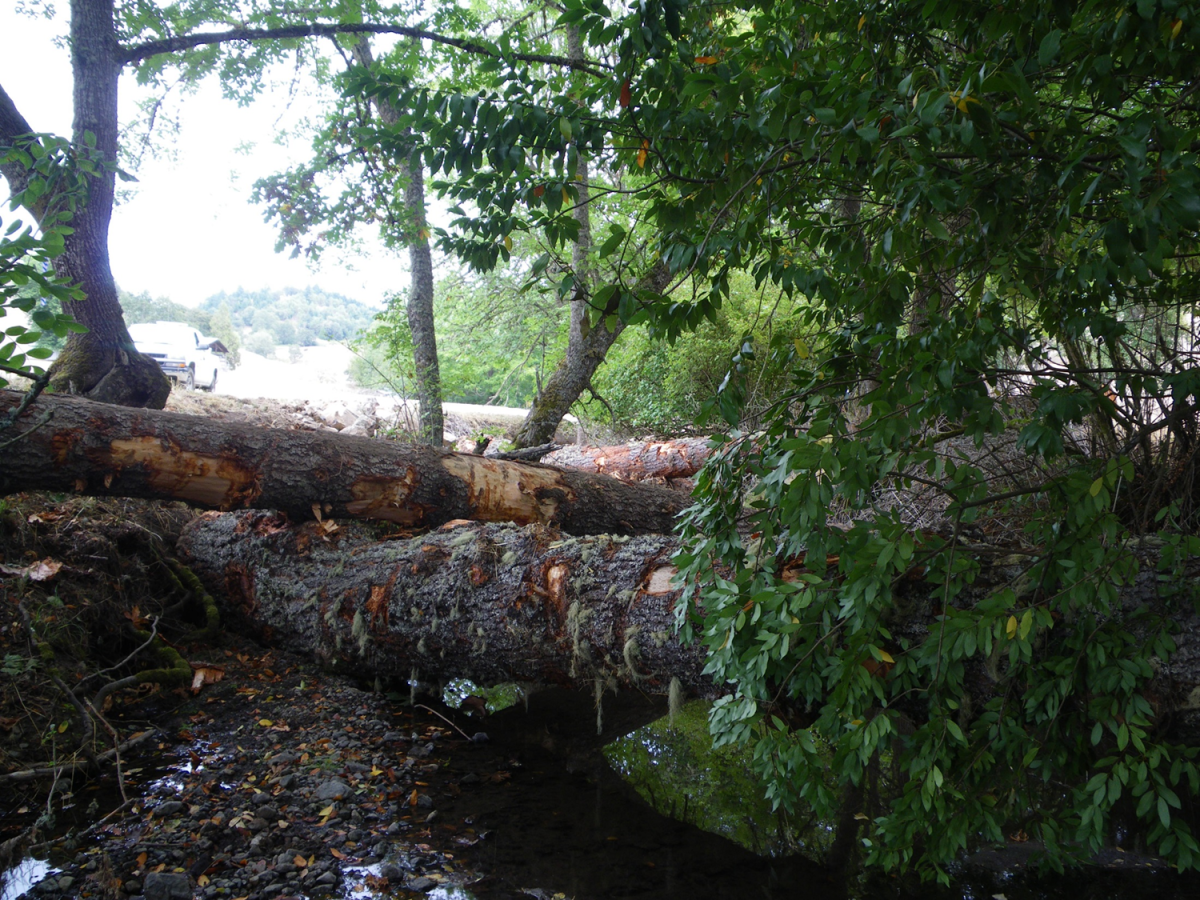 South Fork Deer Creek Restoration