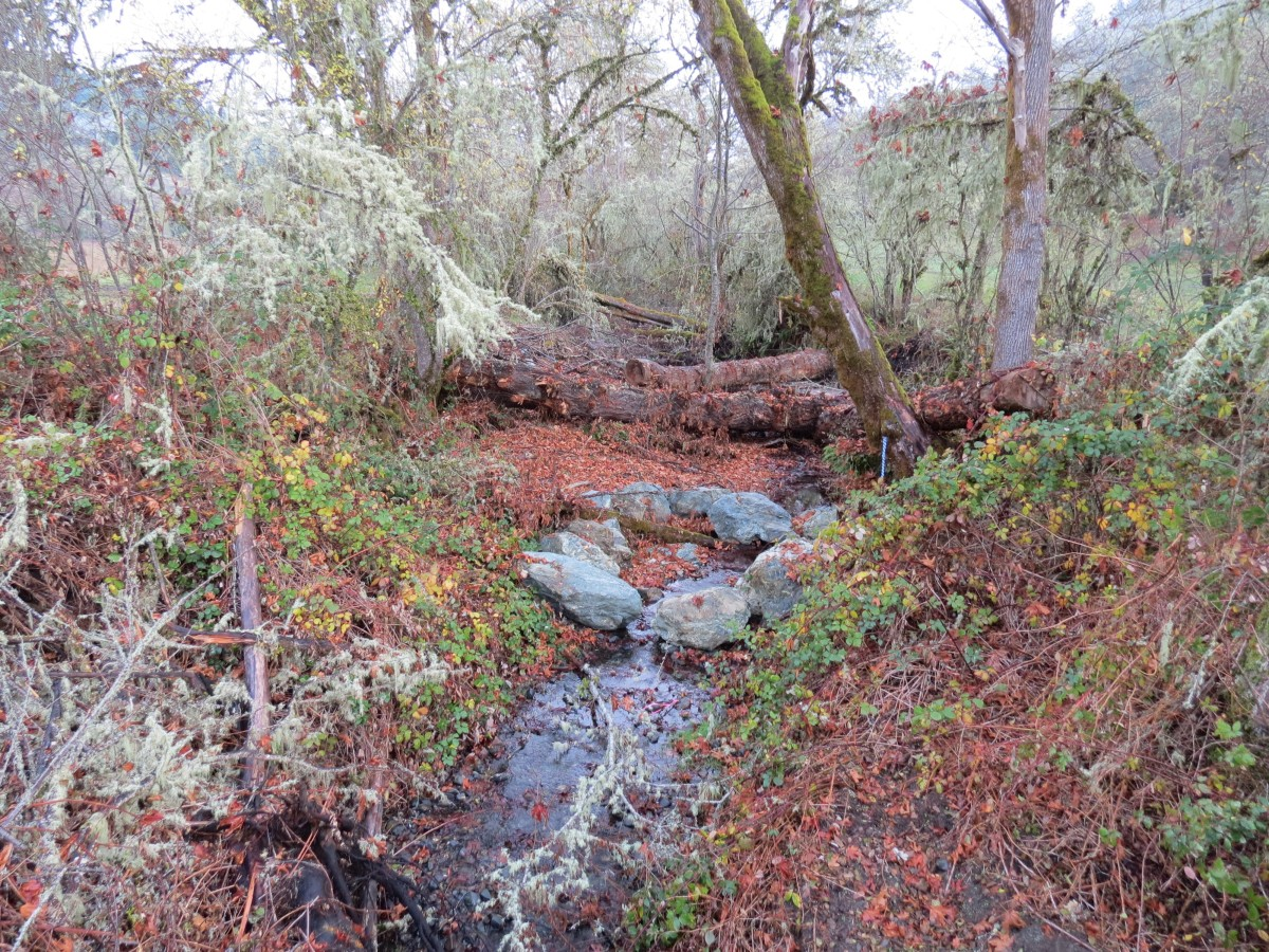 Bilger Creek Restoration