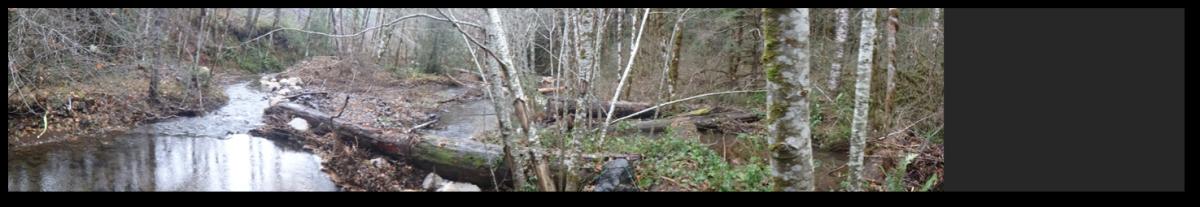 Harrington Creek Restoration