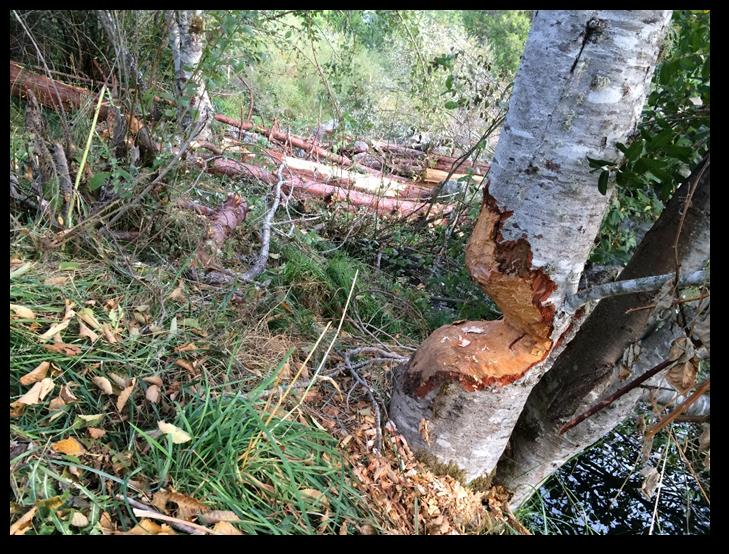 Temile Creek Restoration