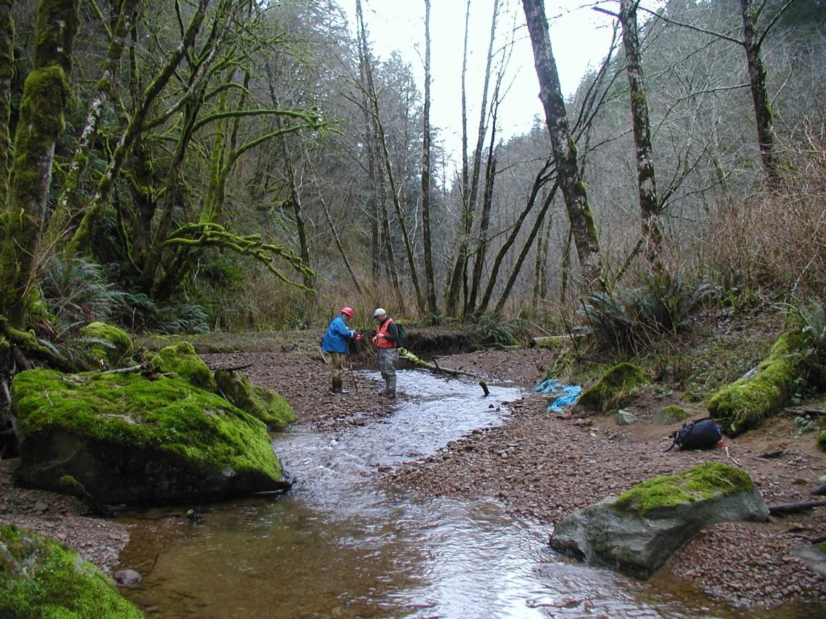 Charlotte & Luder Creek Restoration