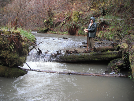 Waggoner Creek Restoration