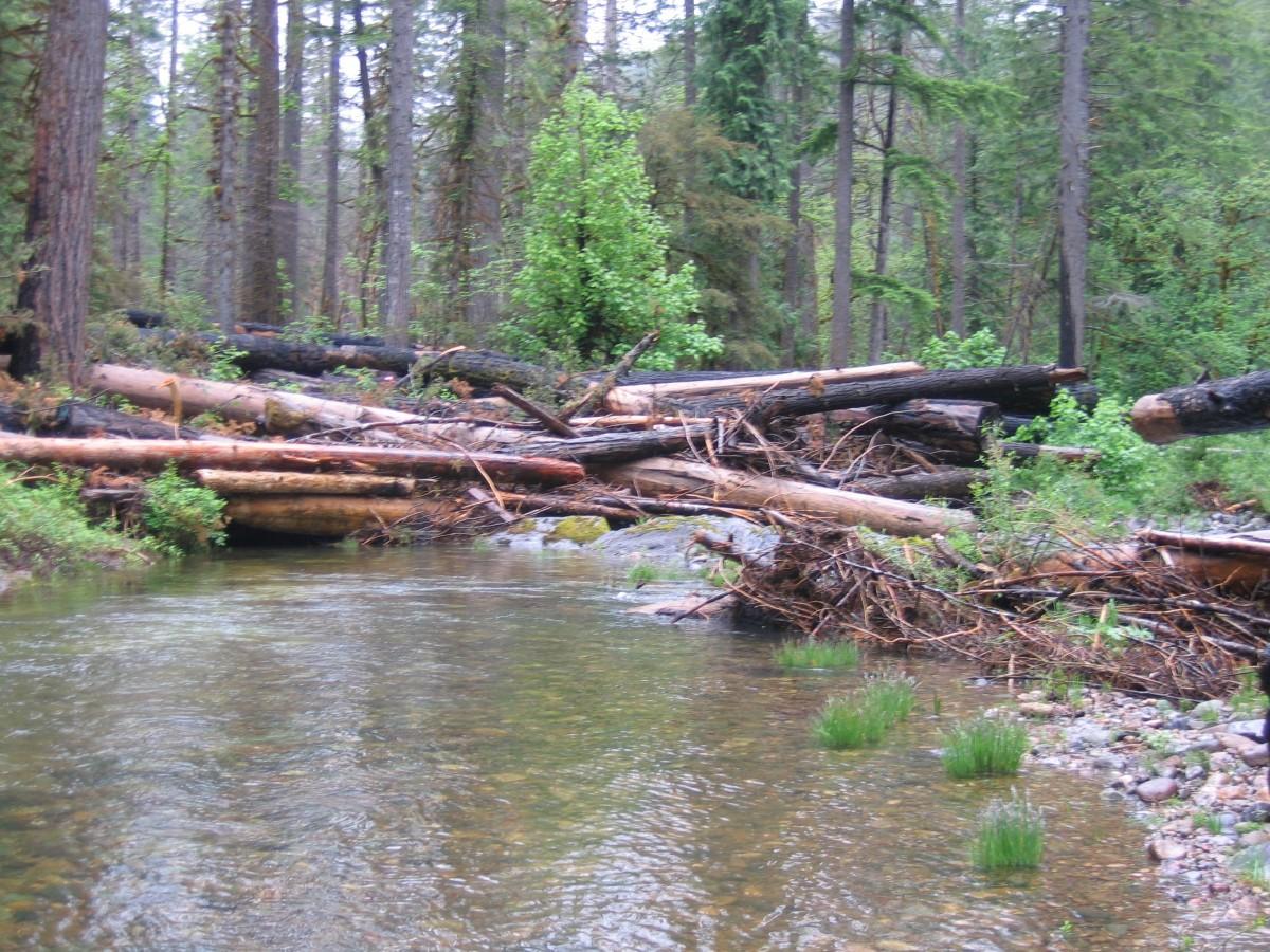 Jackson Creek Restoration