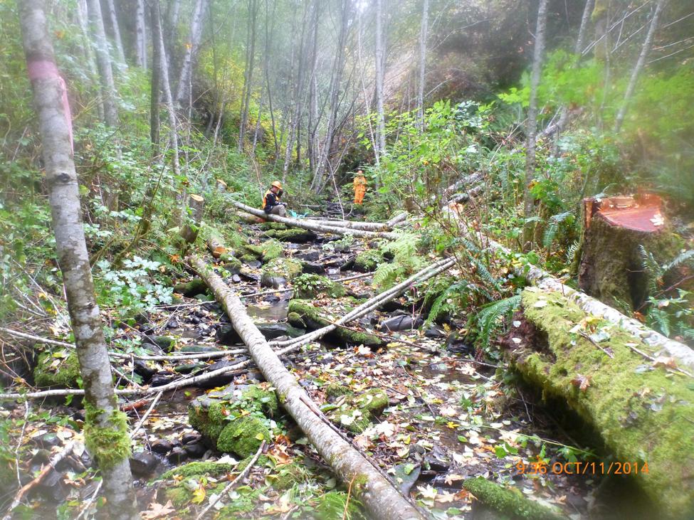 Camp Creek Restoration