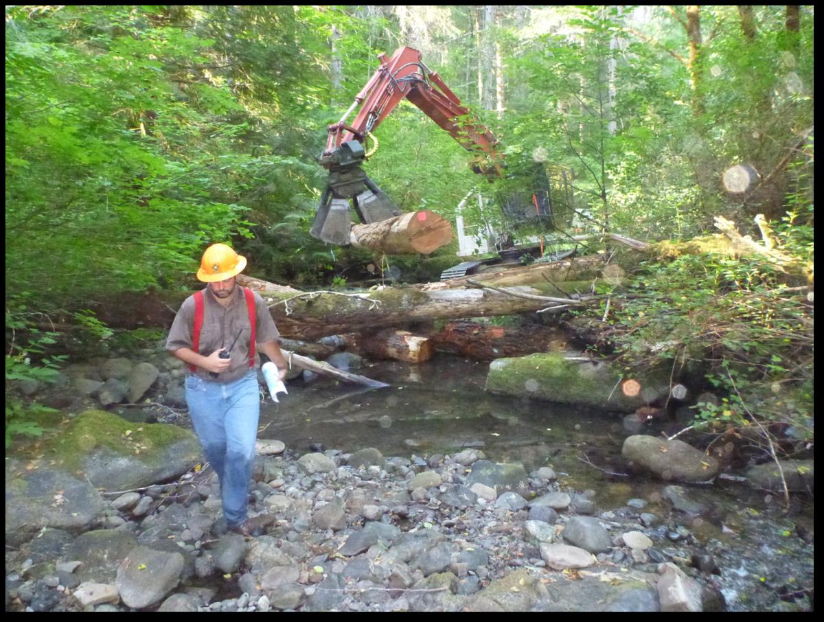 Thompson & Muns Creek Restoration