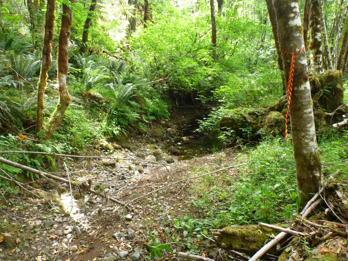 Rock Creek Side Channel Restoration
