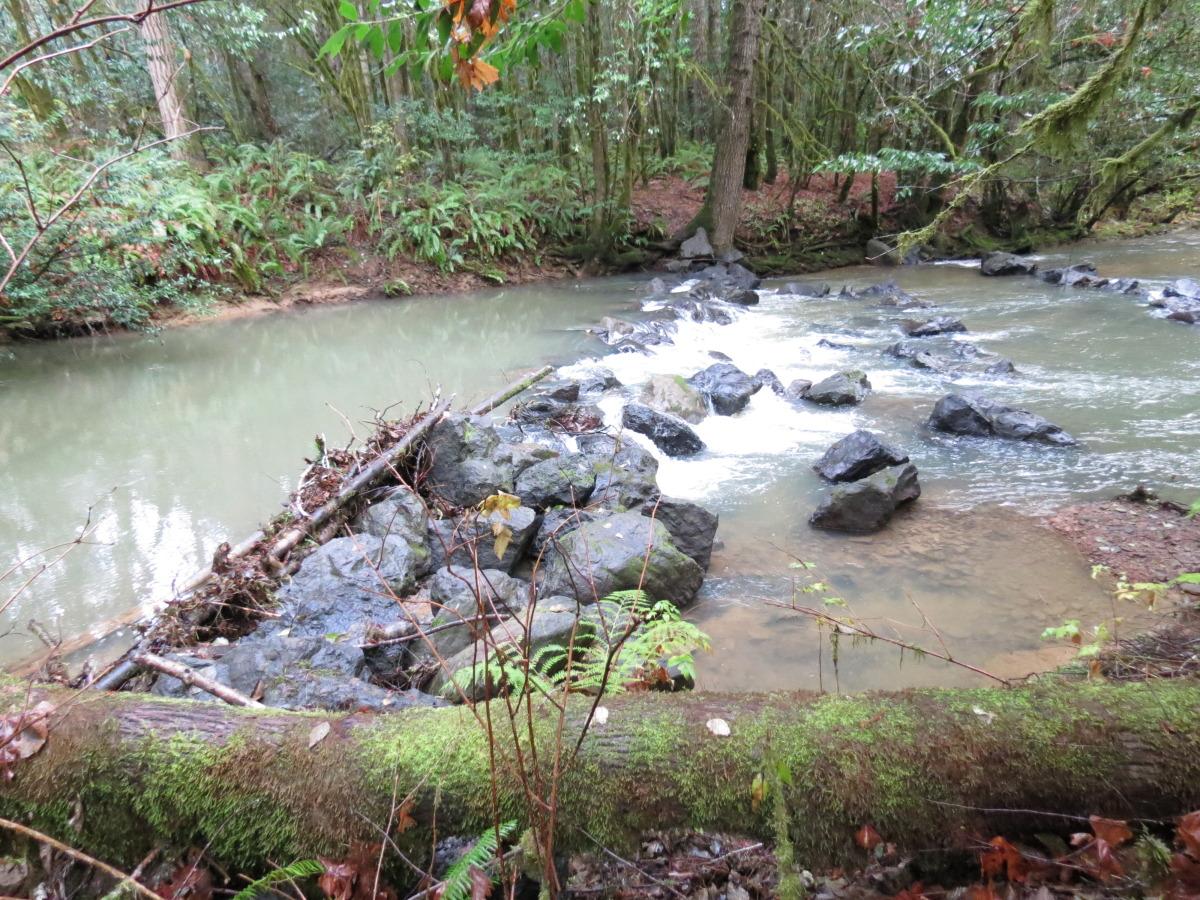 wolf creek 2012 2.jpg