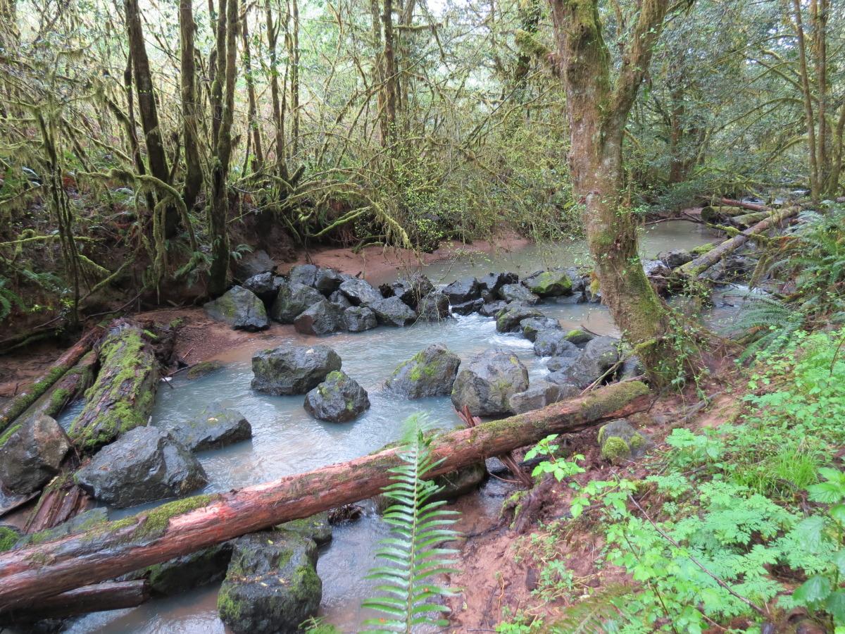 brads creek 3.jpg