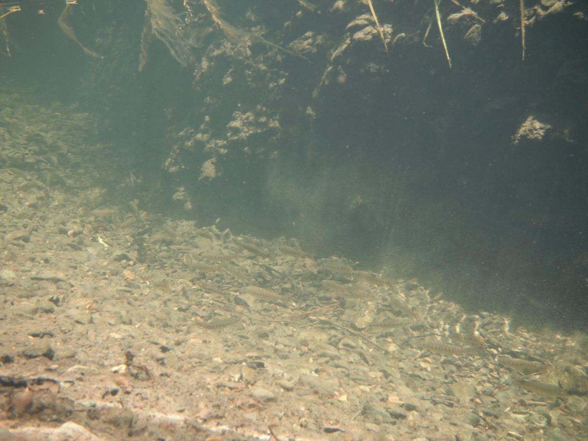 bilger creek 6.jpg