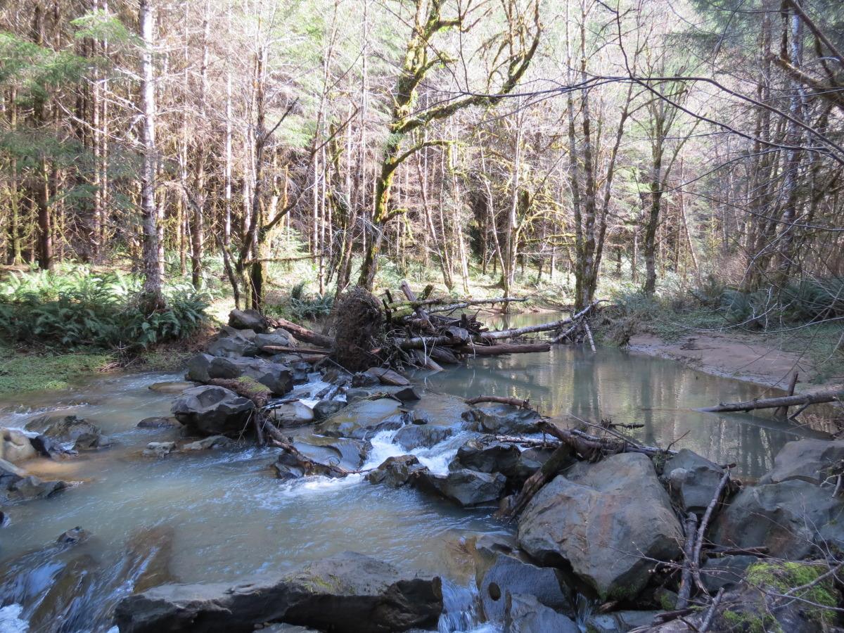lutsinger creek.jpg