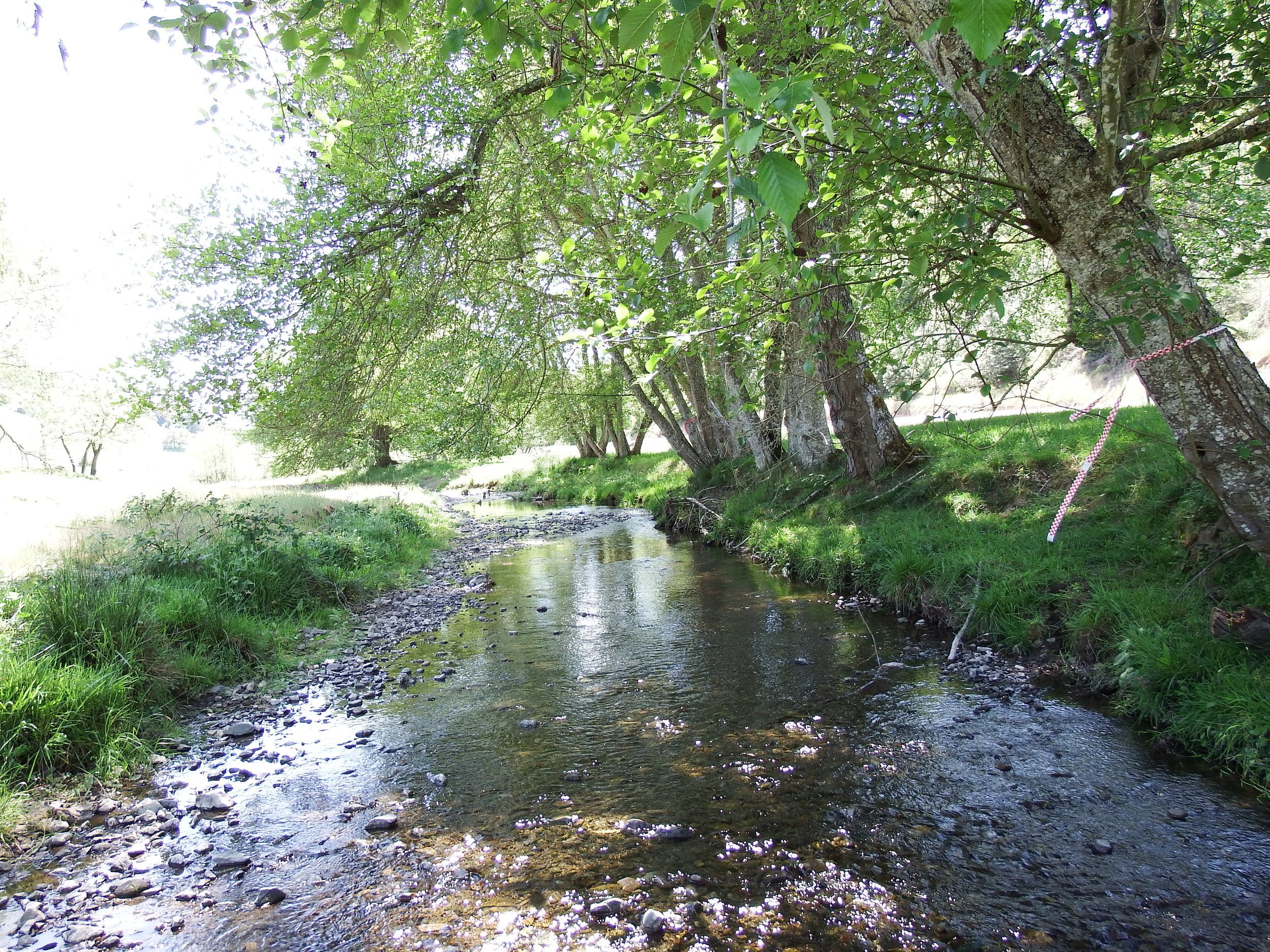 Rice Creek Effectiveness Monitoring -
