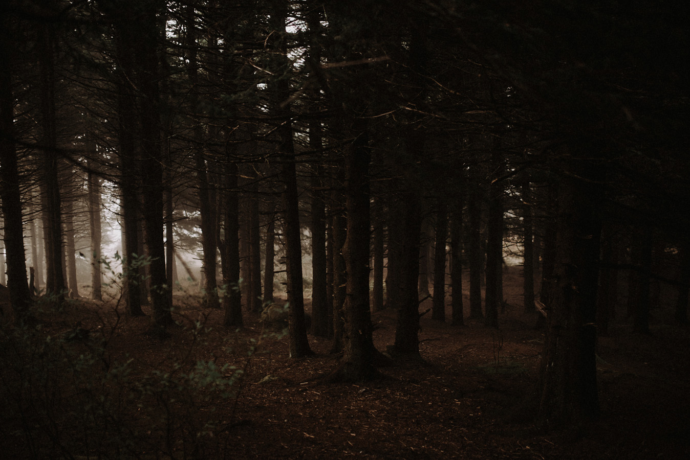 Sunrise+Engagement+Adventure+Hiking+Session+in+the+Blue+Ridge+Smoky+Mountains (1).jpeg
