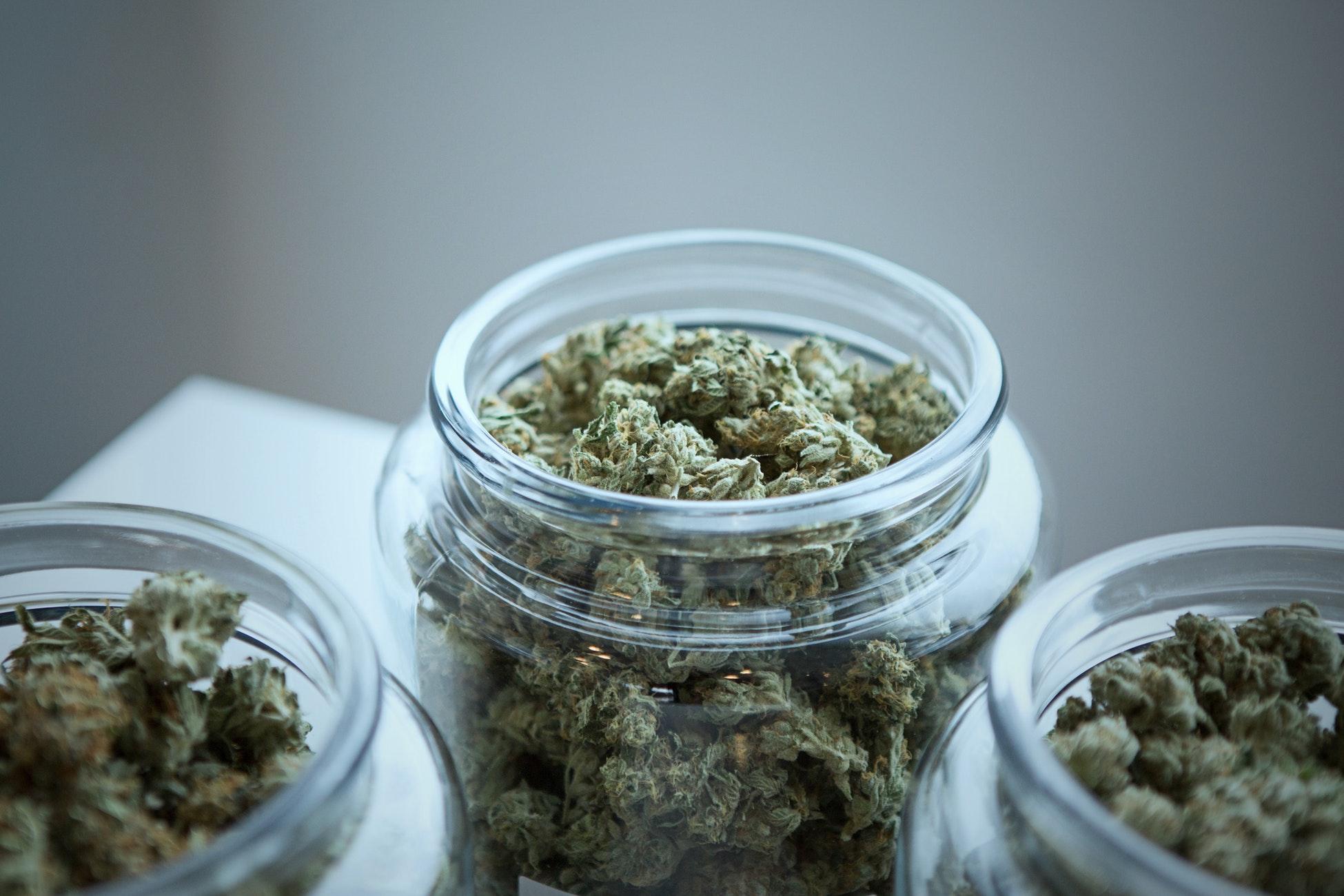 cannabis cocina cannabica rosalba gonzalez