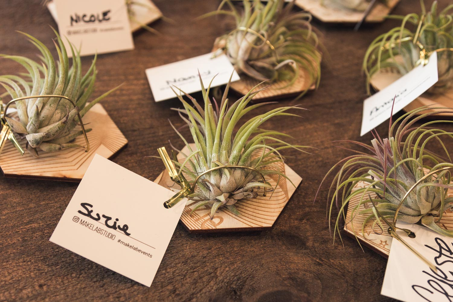 Hanging air plant holders designed by guests