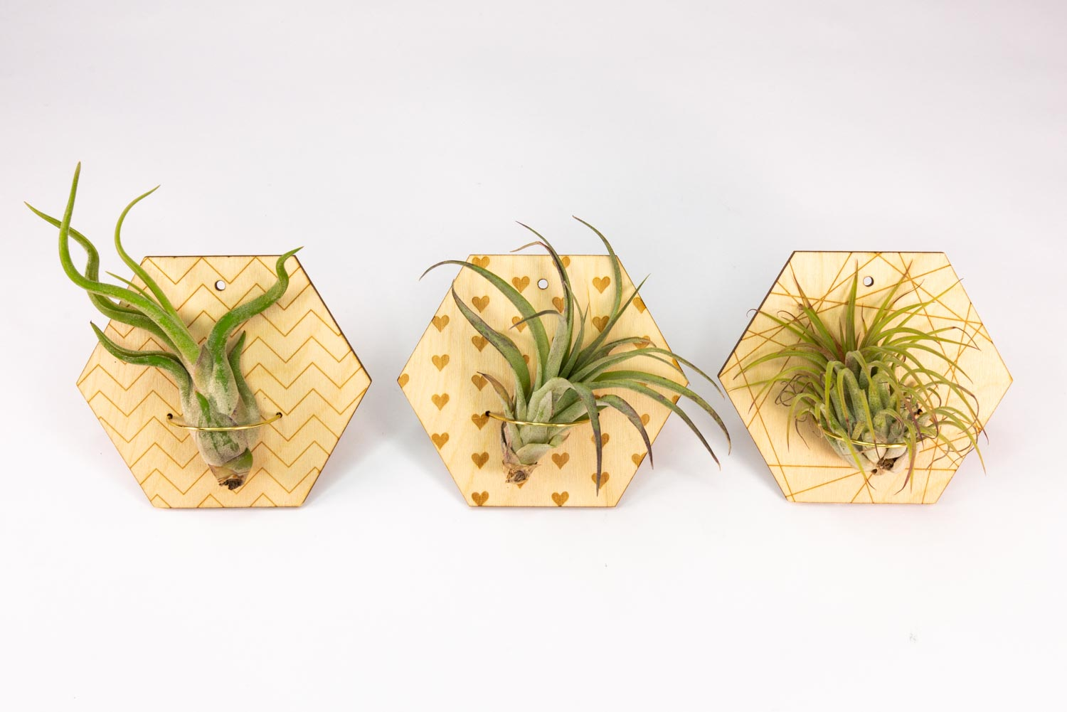 Hanging air plant holders with custom designs