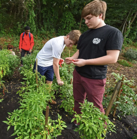 Johns Hopkins's FoodSpan curriculum brings lessons to schools across the country, Washington Post