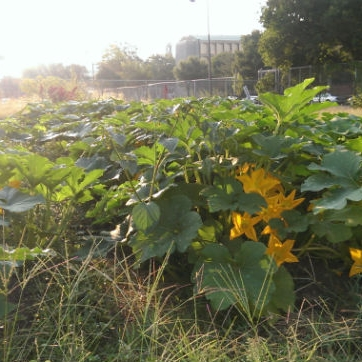DC Greens Will Now Run Farm at Walker-Jones, DCist