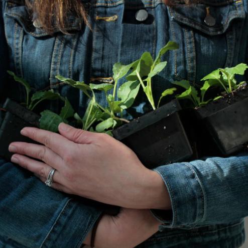 Helping turn teachers into gardeners, Washington Post