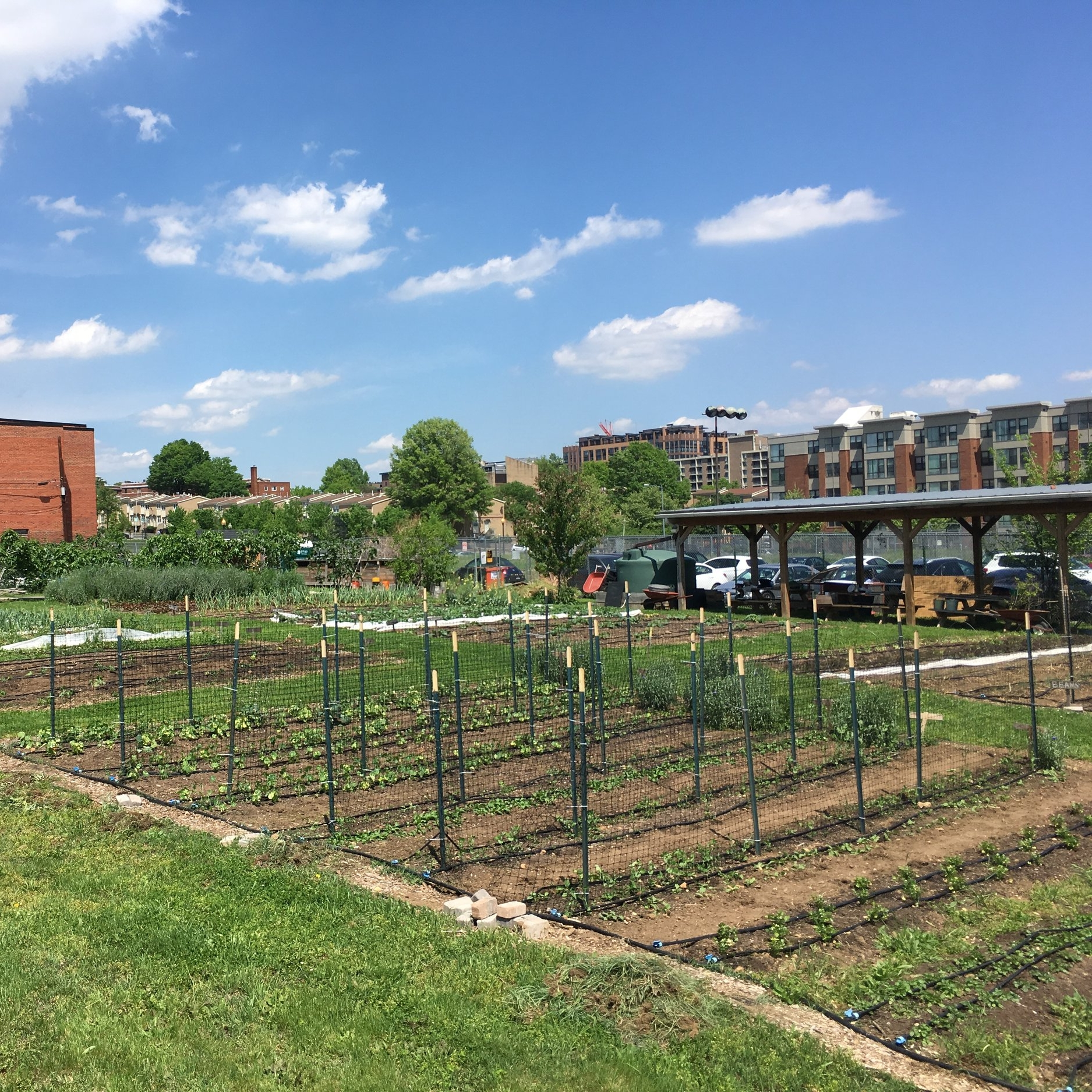 What DC Loses When The K Street Farm Becomes a Pepco Substation, City Paper