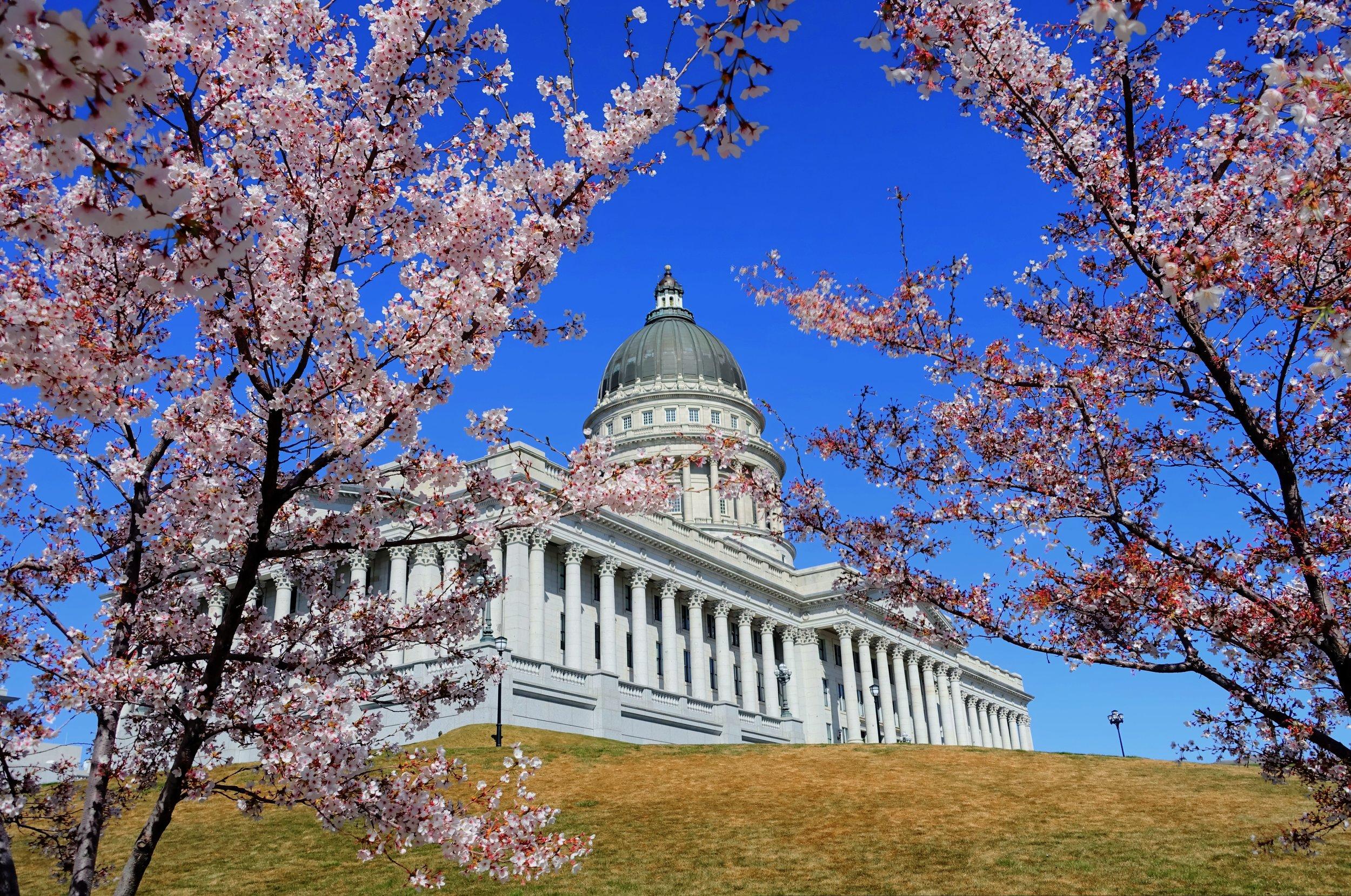 Utah Cherry Blossom.jpg