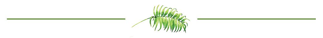 leaf divider 2.png