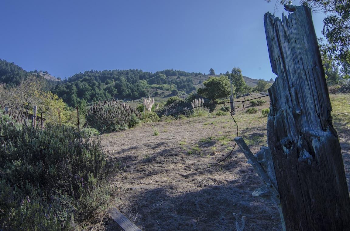The back yard and Mt. Tamalpais.
