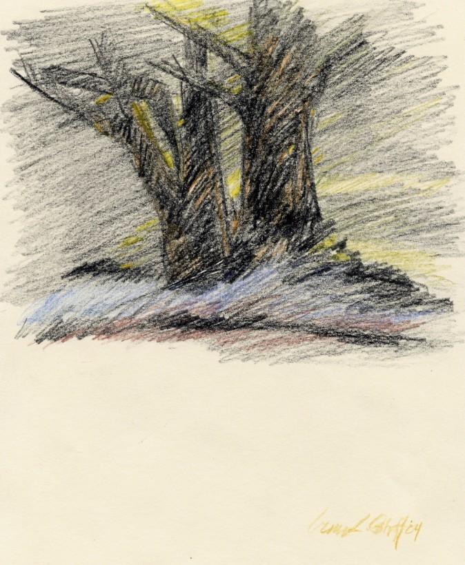 "BLACK TREES ... colored pencil 12""x9"""