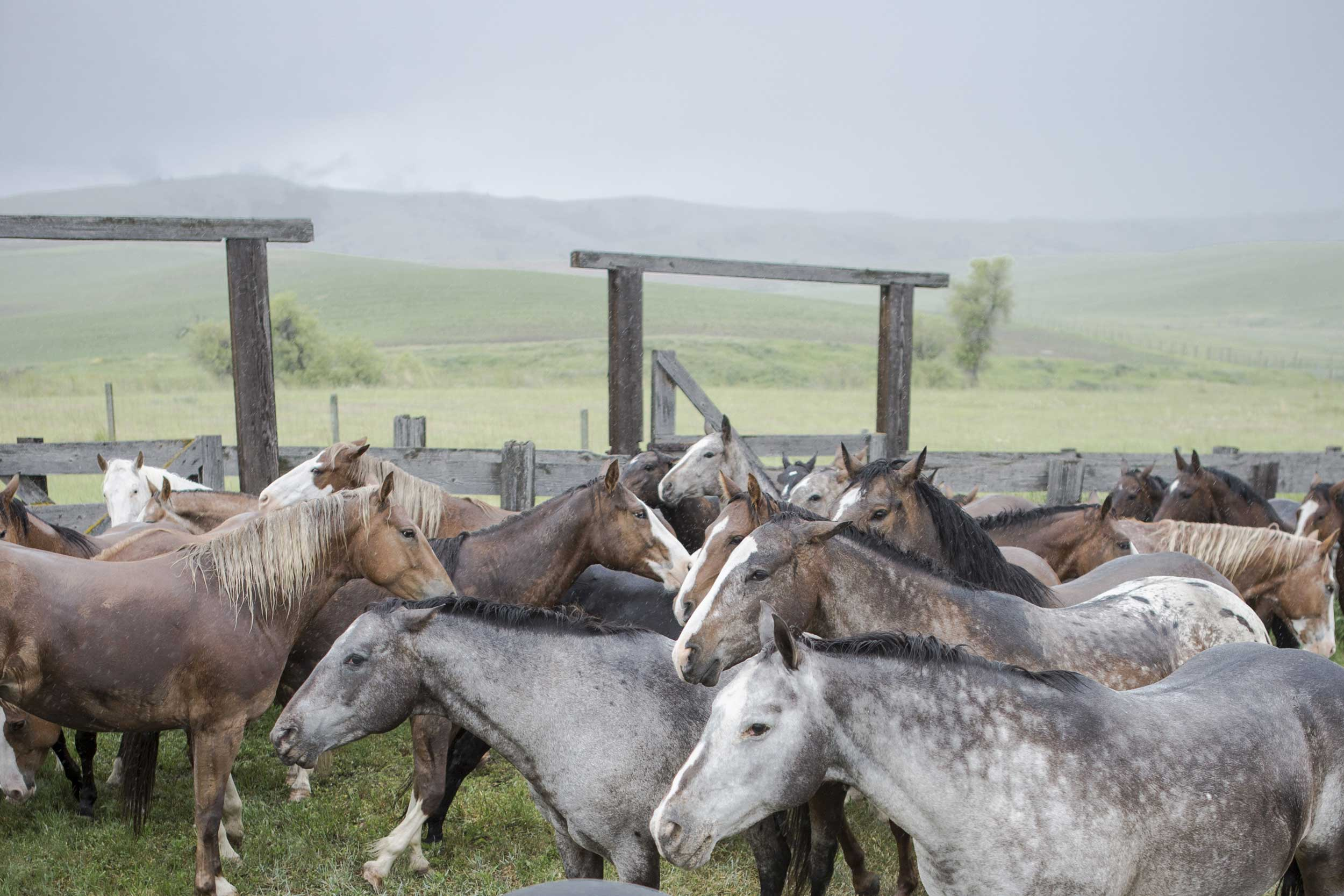 A horse drive at Nine Quarter Circle Ranch in Montana.