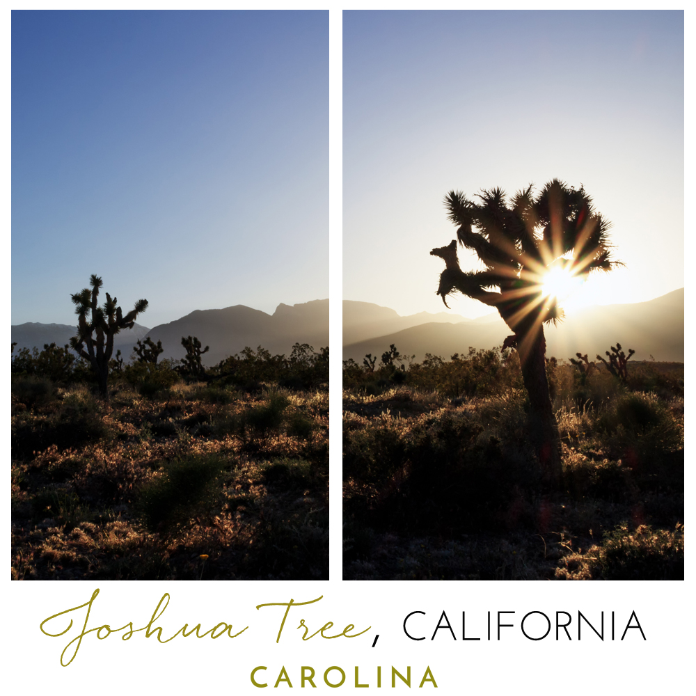 A Joshua Tree Instagram post for Carolina Boutique clothing brand in Mill Valley, California.