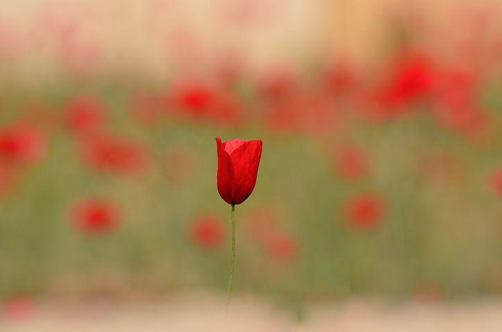 flower-3113068__480.jpg