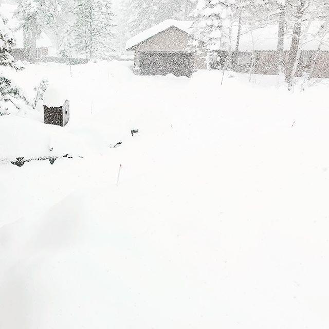 Snow Day? ❄️☃️