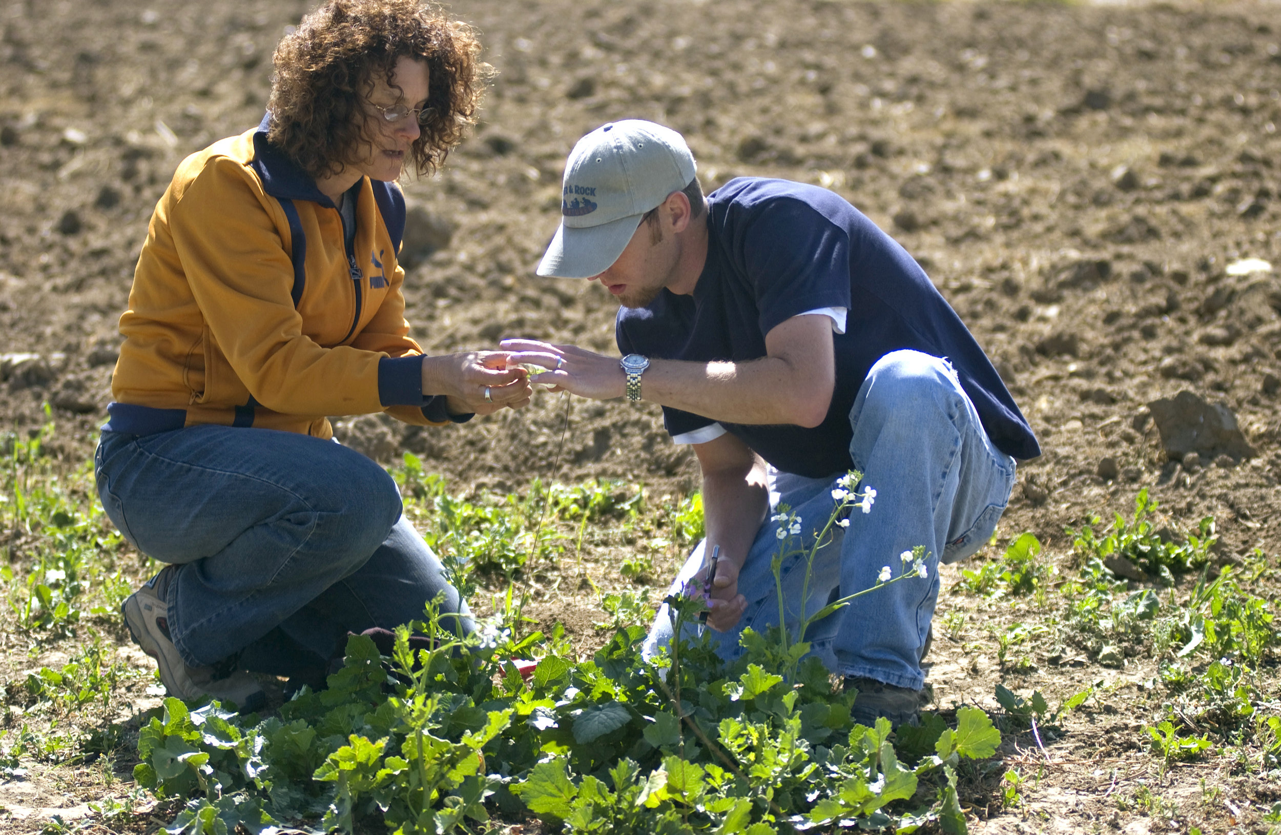 undeclared-exploratory-college-agricultural-environmental-sciences.jpg