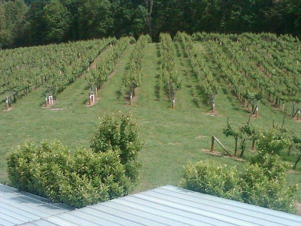 frogtown-cellars-atlanta-wine-tasting9.jpg